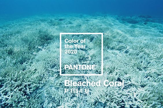 pantone kleur 2020 bleached coral