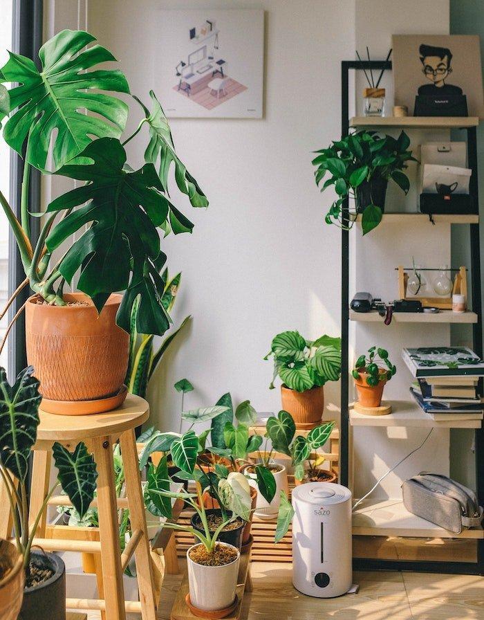 planten-binnen-kamerplanten