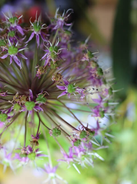 bloomon-bos-boeket-review-9