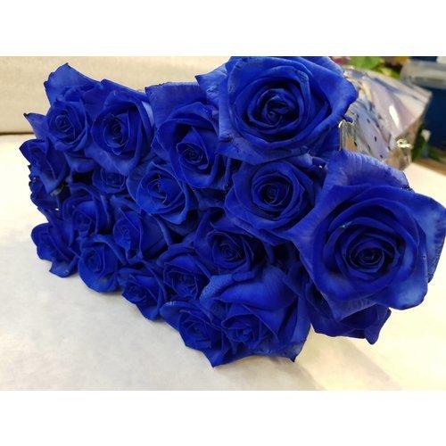 blauwe-rozen