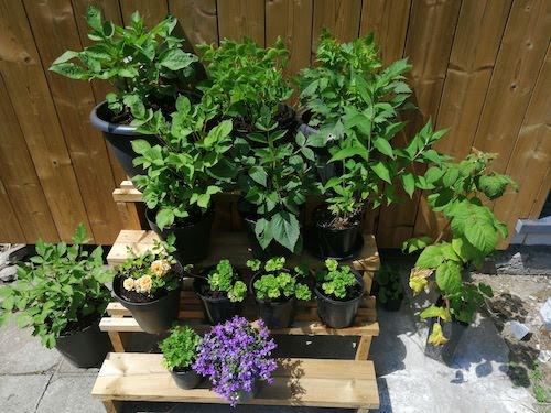 planten-en-bloemen-voorkweken