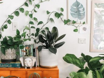 planten-update-interieur