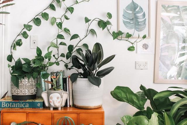 planten-update-interieur
