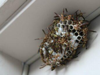 hoe-wespennest-bestrijden